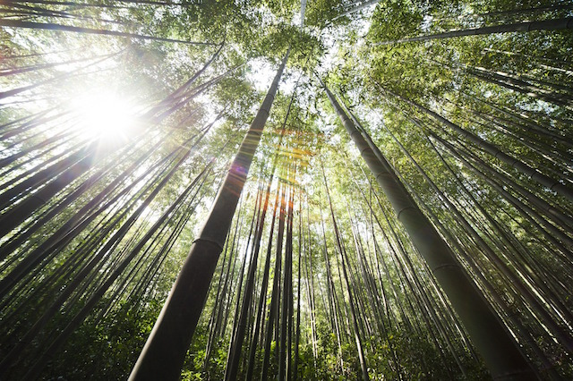 3 Powerful Life Lessons From The Chinese Bamboo Timewiser